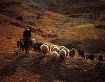 'Yo soy el Buen Pastor y conozco a mis ovejas'